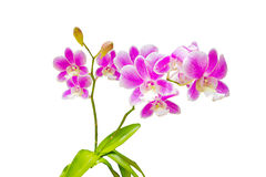 Beautiful orchid Stock Photos