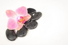 Beautiful orchid Stock Photography