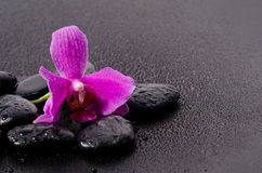 Beautiful orchid Royalty Free Stock Photo