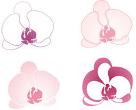 Beautiful orchid. Flower beautiful orchid for backgrounds or decoration Stock Illustration