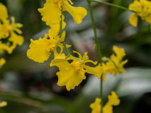 Beautiful orchid against natural green background in greenhouse Stock Images