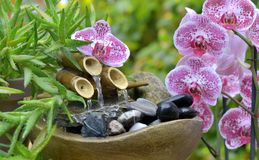 Beautiful Orchid And Little Fountain In A Garden Stock Image