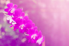 Beautiful orchid background. Beautiful thai orchid horizontal background made with color filters stock images
