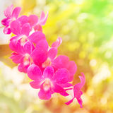 Beautiful orchid background. Beautiful thai orchid background made with color filters stock photography