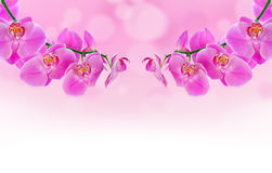 Beautiful Orchid and blur bokeh Stock Photography