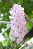 Beautiful orchid on blurred background ,selective focus. Stock Photography