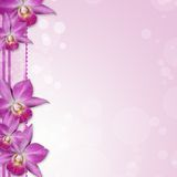 Beautiful Orchid border Stock Photography
