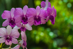 Beautiful orchid bouquet of flowers to bloom beautifully. Royalty Free Stock Image