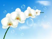 .Beautiful orchid with bubbles on the blue sky. Stock Photos
