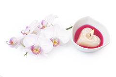 Beautiful Orchid and candle. On white background stock images