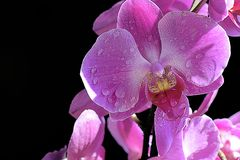 Beautiful orchid close up in my room Royalty Free Stock Images