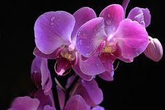 Beautiful orchid close up in my room Royalty Free Stock Photos