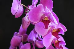 Beautiful orchid close up in my room Stock Photography