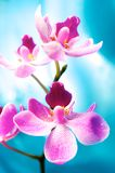 Beautiful orchid flower Stock Photography