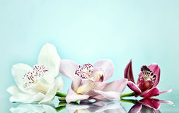 Beautiful orchid flower background Stock Photography