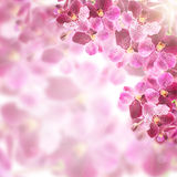 Beautiful Orchid Flower frame Border Design. Stock Image
