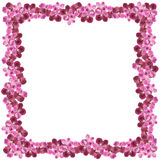 Beautiful orchid flower frame on white background. Royalty Free Stock Photo