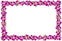 Beautiful orchid flower frame on white background. Royalty Free Stock Images