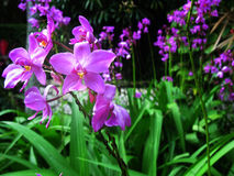 Beautiful orchid flower. At the garden Royalty Free Stock Image