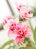 Beautiful orchid flower with natural background Royalty Free Stock Photo