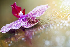 Beautiful orchid flower Stock Images