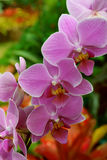 Beautiful orchid flower Royalty Free Stock Photography