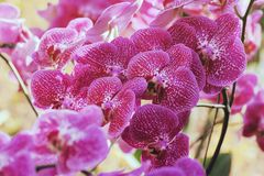 Beautiful orchid flower in winter Royalty Free Stock Photography