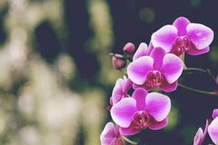 Beautiful orchid flower in winter Stock Photos