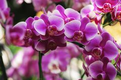 Beautiful orchid flower in winter Royalty Free Stock Photo