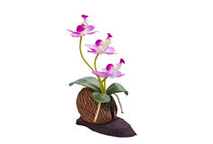 Beautiful Orchid Flowers Royalty Free Stock Photography