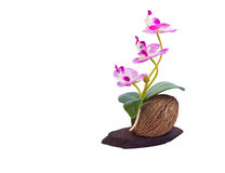 Beautiful Orchid Flowers Stock Image