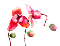 Beautiful orchid flowers Royalty Free Stock Photos