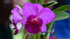 Beautiful orchid flowers blooming stock footage