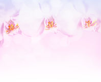 Beautiful orchid flowers border Stock Photo