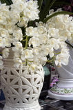 Beautiful orchid flowers. Closeup picture of beautiful orchid flowers Royalty Free Stock Images