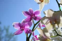 Beautiful orchid flowers Stock Photography