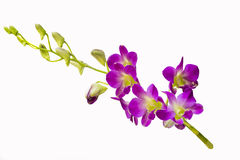 Beautiful orchid flowers Stock Photos