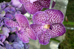 Beautiful orchid flowers Stock Images