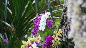 Beautiful orchid flowers in the park. Many kind of orchid flowers at Tao Dan park in Saigon, Vietnam stock footage