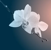 Beautiful orchid flowers. Vintage card. Sad mood. Stock Photography