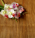 Beautiful orchid flowers on a wooden background Royalty Free Stock Photos