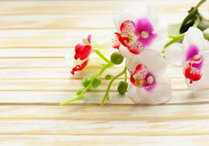Beautiful orchid flowers on a wooden background Royalty Free Stock Photography