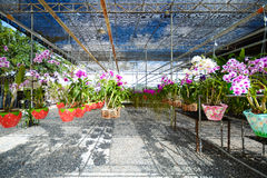 Beautiful Orchid Garden in Flora Park Royalty Free Stock Photography