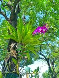 Beautiful orchid Growing by living on a big tree. royalty free stock photo