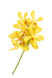 Beautiful orchid isolated on white Royalty Free Stock Photography
