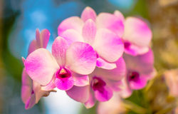 Beautiful orchid3 Royalty Free Stock Photo