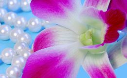 Beautiful orchid and pearls Stock Photo