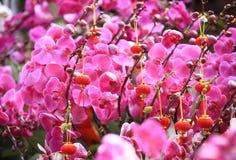 Beautiful orchid - phalaenopsis Stock Photo
