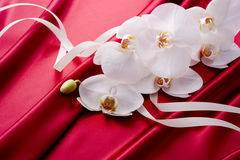 Beautiful orchid on the red satin Stock Photography