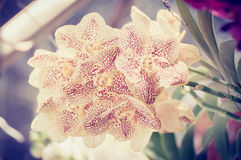Beautiful orchid and vintage light Royalty Free Stock Photos